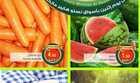 عروض نستو الرياض مهرجان الطازج كل اثنين